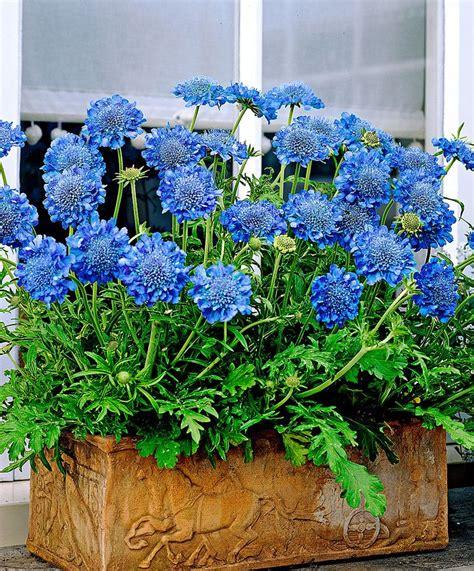 Blue Garden Flowers 25 Best Ideas About Blue Garden On Blue Flowers Blue Plants And Blue Flowering Shrubs