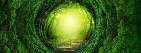 fantasy forest banner background dream forest radiance