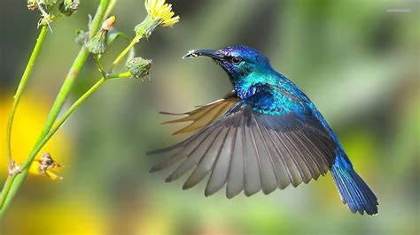 post hummingbird ecommerce seo services the miami seo
