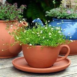teacup saucer planters terracotta uk the home of