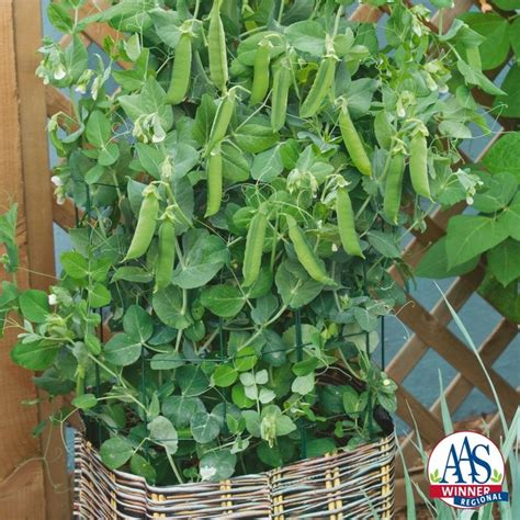 Container Vegetable Gardening Florida Best 611 Patio Pots And Containers Images On