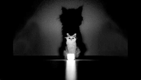imagenes suicidas en blanco y negro incre 237 bles fotos de misteriosos gatos en blanco y negro