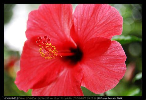 fiori di co nomi nome etimologia e significato dei fiori etimologia delle