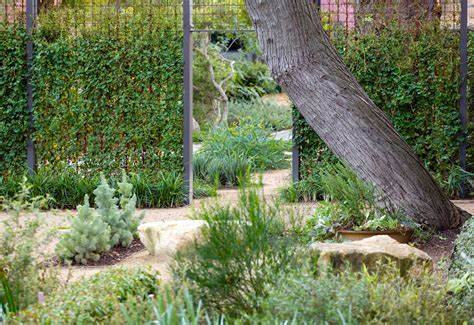 Australian Botanic Garden T C L Cullity Lethlean Projects Adelaide Botanic Gardens Garden