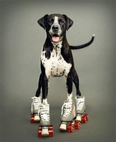 rollers, dogs and skating on pinterest