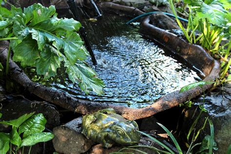 how to make a frog pond in your backyard free range chooks the food chain pecking order clover