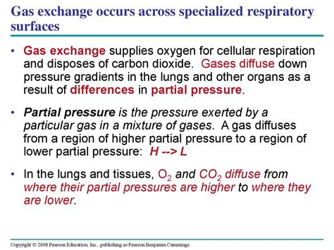 gas exchange across respiratory surfaces boundless biology circulation and gas exchange презентация онлайн