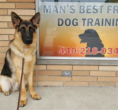 trained companion for sale gator german shepherd s best friend