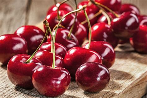 can dogs cherries can dogs cherries american kennel club