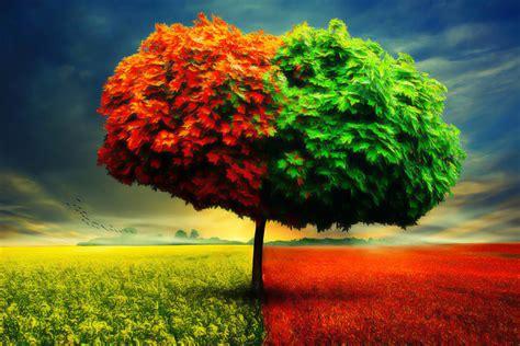 chagne wallpaper best tree hd free wallpaper season tree hd wallpaper