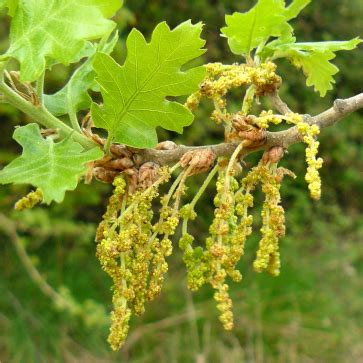 fiori di bach per stress stress da anno ecco il prontosoccorso fiori di bach