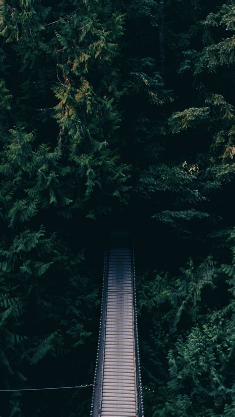 iphone 7 wallpaper for android dense green forest bridge android wallpaper free download