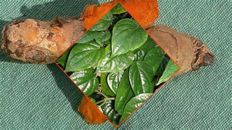 Herbal Jahe Merah Kunyit Temu Lawak 5 manfaat kunyit cur daun sirih yang akan mengejutkan anda tanaman obat keluarga