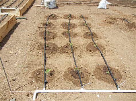 Garden Drip Irrigation by Garden Drip System Irrigation Gardenallie