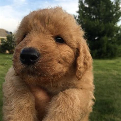 doggie doodle martinsville indiana indiana for sale puppies for sale