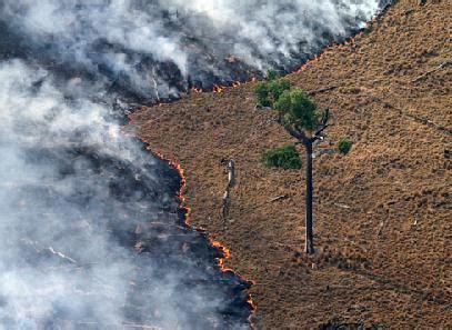 imagenes impactantes sobre la contaminacion portal ecol 243 gia floresta amaz 244 nica a 231 227 o antr 243 pica