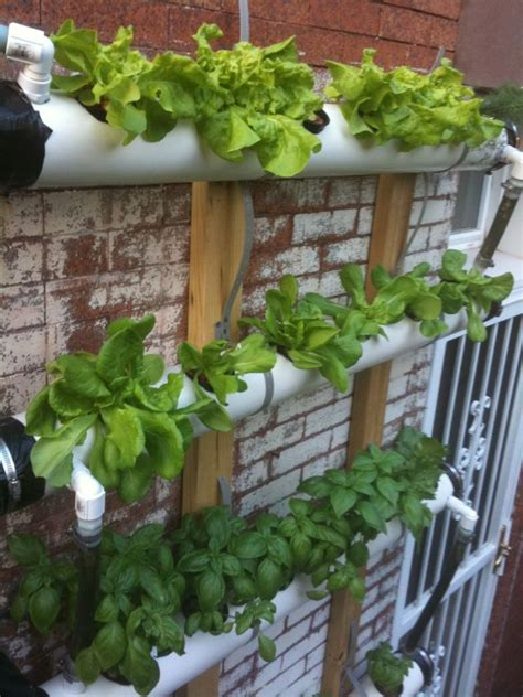 continuous flow aquaponic wall systems greenie