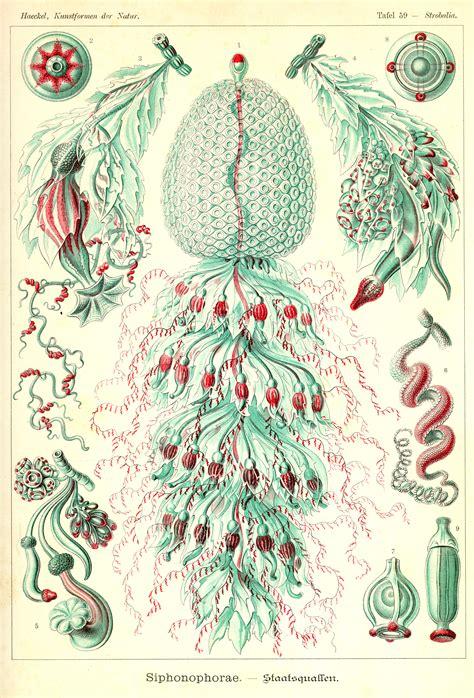 libro art forms in nature ernst haeckel origen de la vida ilustraciones