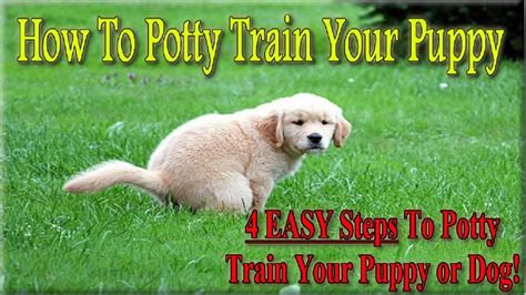 easy to house train dog breeds how to potty train a puppy 4 easy steps how to house train your dog youtube