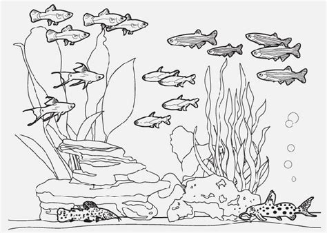 Fish Tank Coloring Pages Free Coloring Pages And Fish Tank Coloring Pages