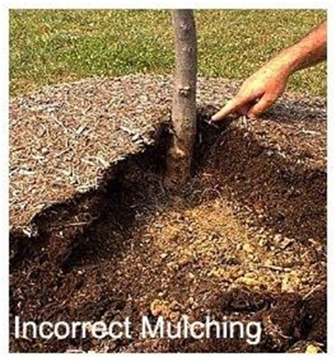 dont kill your trees make sure you are mulching them the