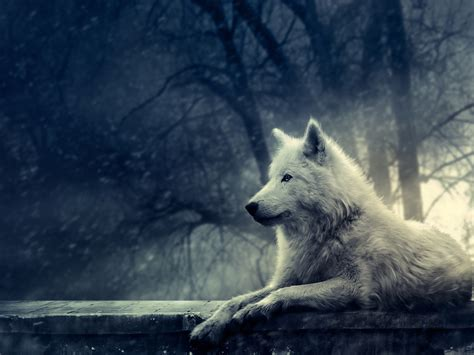 white wolf white wolf background yorkshire rose wallpaper 22219235 fanpop