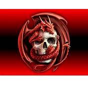 Download Scary Skulls Wallpaper Skull With Dragon