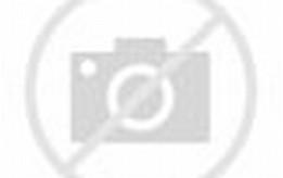 African Lion Animal