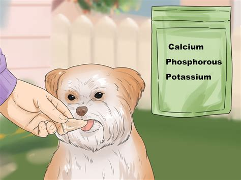 what to feed a shih tzu 3 ways to feed your shih tzu wikihow