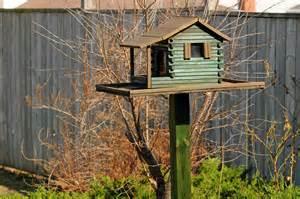 bird feeder living life in glorious colour