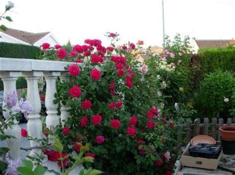 imagenes de jardines con rosales jardines 187 rosales trepadores