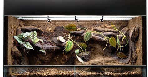 choisir  terrarium ou vivarium pour son lezard modeles