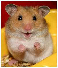 Makanan Hamster  Dunia Hammie