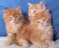 Gambar Foto Kucing Lucu | Berita Terbaru Online