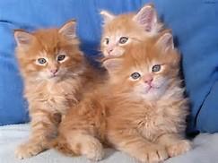 Cute Baby Animal Pets