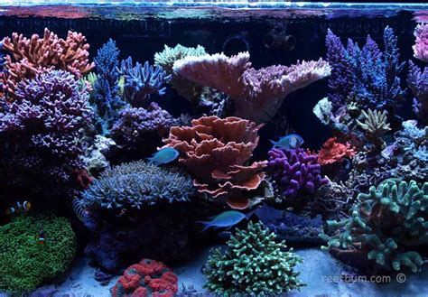 Lu Metal Halide Aquarium dealing with bugs and aefw reefbum