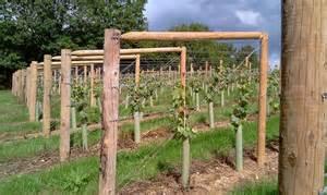 Training Grape Vines Pergola by Grapevine Trellis Designs Grape Trellis Training Systems