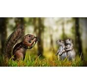 Download Free Animals Funny Desktop Hd Wallpaper 1080&2151920