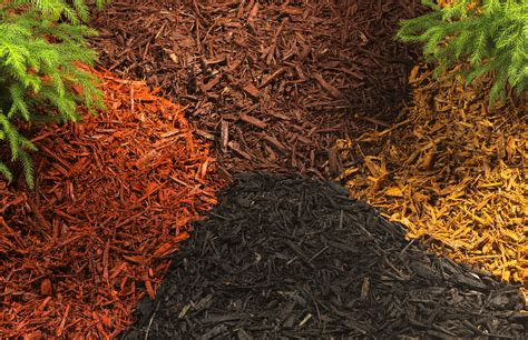 10 types of garden mulch choose the right one for your