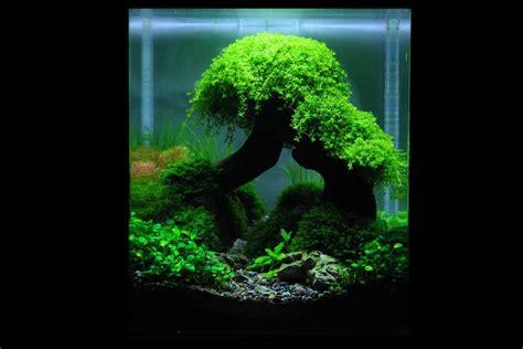 planted nano tanks  art   planted aquarium die