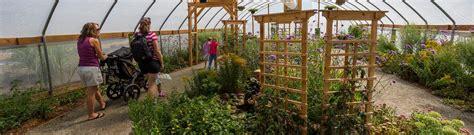 denver botanic gardens chatfield butterflies at chatfield denver botanic gardens