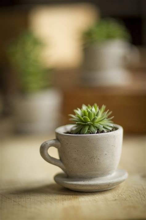 unique plant pots 50 unique pots planters you can buy right now