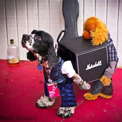 Motorrad Verkleidung Kitten by Hunde Hunde Roadie Verkleidung Die Besten 100 Bilder