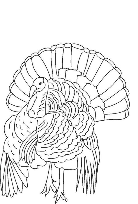 printable turkey pictures to color free printable turkey coloring pages for kids