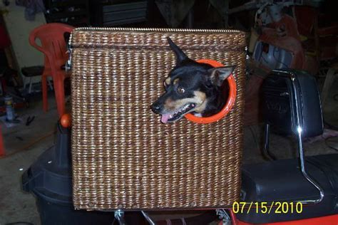 bicycle baskets for dogs terrierman s daily dose bicycle baskets for the dogs