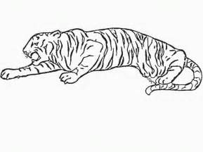 Baby Tiger Outline by Tiger Outline Coloring Home
