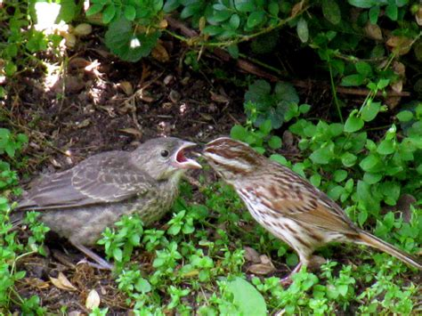 baby sparrow food