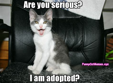 Cat Meme Images - are you serious i am adopted funny cat memes