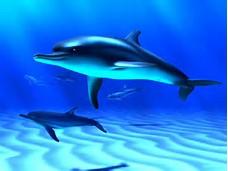 Free Animated Wallpaper Ocean Fish