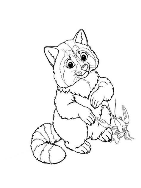 raccoon coloring pages kindergarten preschool pages of raccoons coloring pages